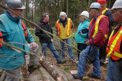 Logs, posts, lumber, firewood, harvesting and more, Tim answered all of oput questions