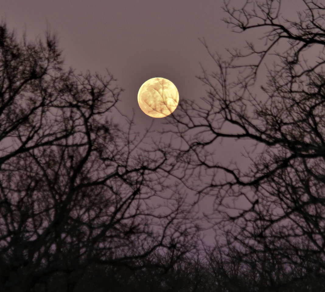 full-moon-through-the-trees